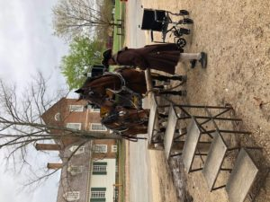 two percheron mix horses